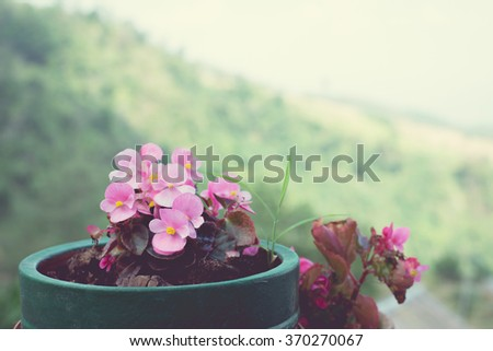 Vintage Tone of Pink Flowers in the Pot with Nature Blurred Background - stock photo