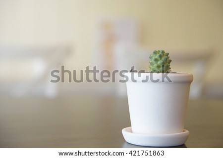vintage tone Vintage tone Cactus Close up of globe shaped cactus  - stock photo