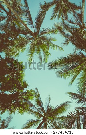 Vintage toned different palm trees over sky background, view up - stock photo