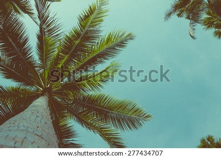 Vintage toned palm trees over sky background with copy space - stock photo