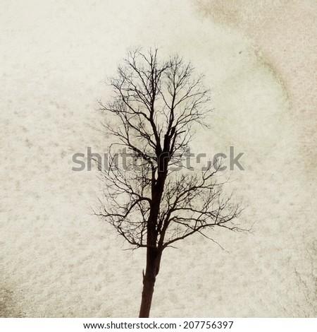 Vintage tree image  - stock photo