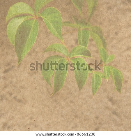 vintage wallpaper background with leaf of grape - stock photo