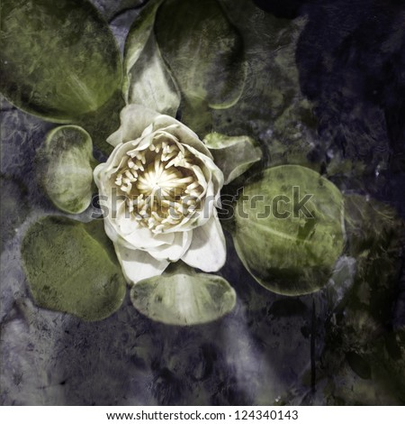 Vintage water lily background - stock photo