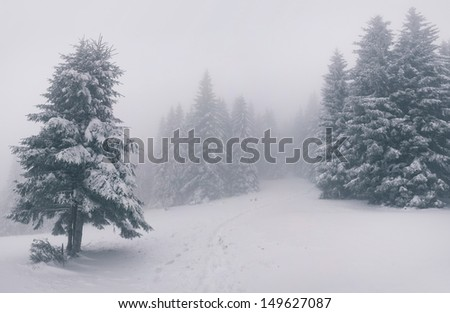 Vintage winter landscape in the forest - stock photo