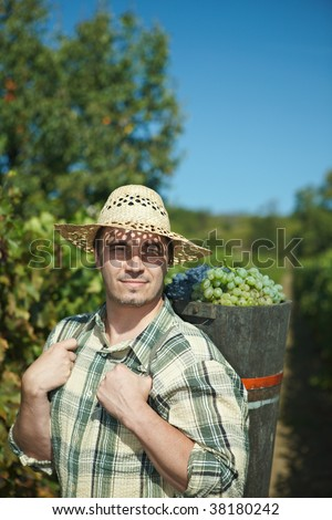 Vintager harvesting grapes to butt. - stock photo
