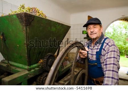 Vintner pressing grape during the vintage. - stock photo