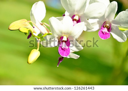 Violet and white orchid - stock photo