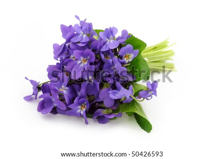 Violet bouquet on white background - stock photo