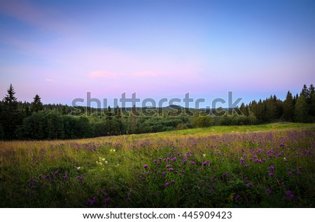 violet evening sky over the flower covered meadow - stock photo