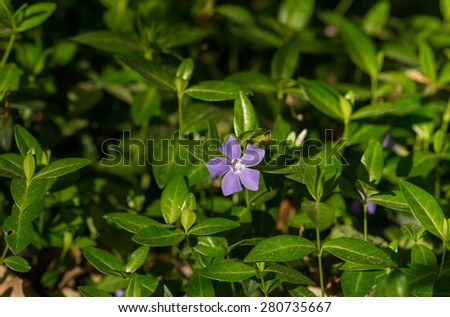 Violet Flower  - stock photo