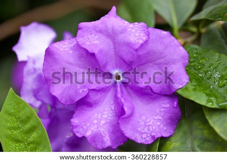 Violet flower on the background of leaves - stock photo