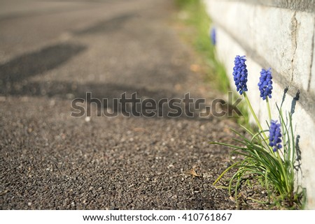 violet flowers and a ground space - stock photo
