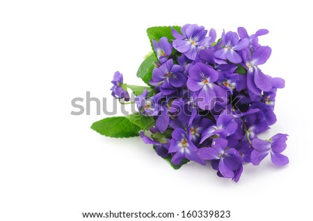 Violet flowers bouquet - stock photo