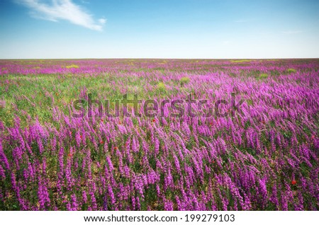 Violet meadow. Composition of nature. - stock photo