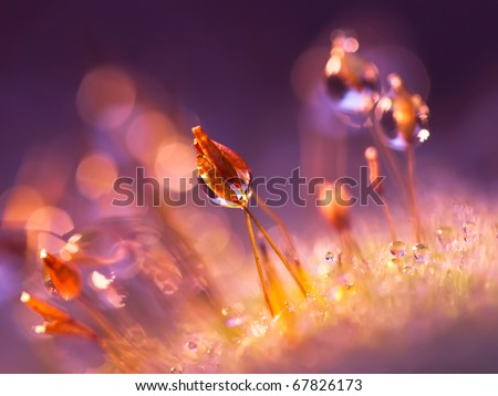 Violet moss - stock photo