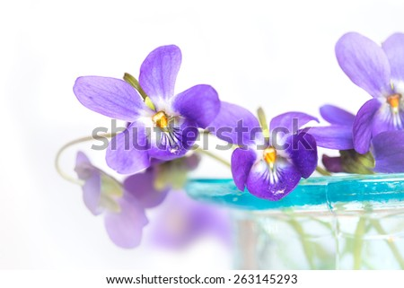 Violets in  blue glass vase - stock photo