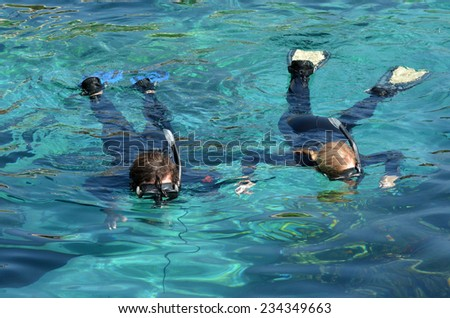 Visitors dive in Shark Bay touch pool at Sea World Gold Coast Australia. - stock photo