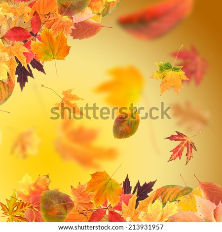 Vivid autumn leaves - stock photo