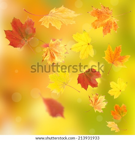 Vivid autumn leaves background - stock photo