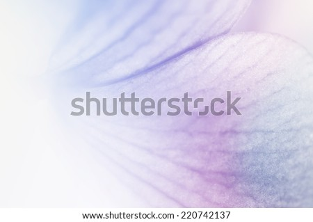 vivid color orchid petal in soft color style for background             - stock photo