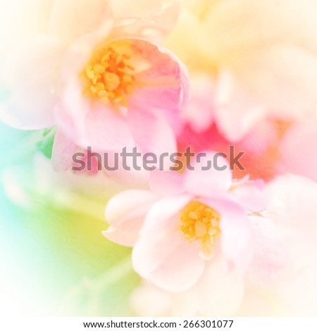 vivid color roses flower in soft and blur style on mulberry paper texture - stock photo