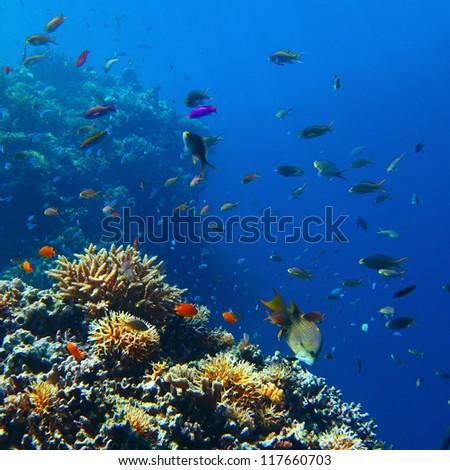 Vivid coral reef full of different creatures - stock photo