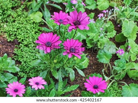 Vivid flowers in the green garden, fresh and beautiful flowers. - stock photo