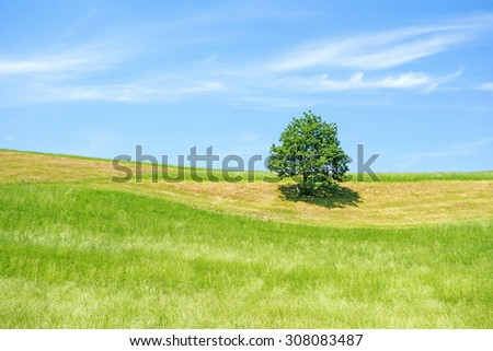 Vivid green farmland with lonely tree and blue sky with cloud veil - stock photo