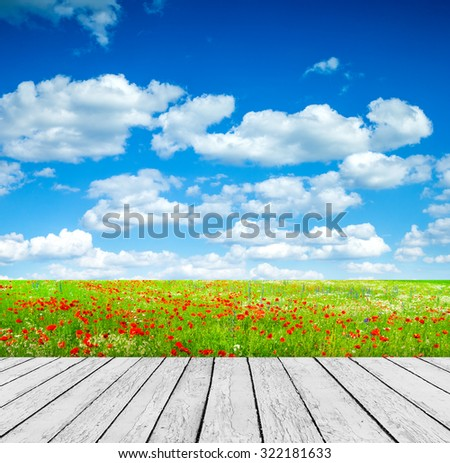 Vivid poppy field - stock photo