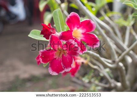 vivid red flowers blooming  - stock photo