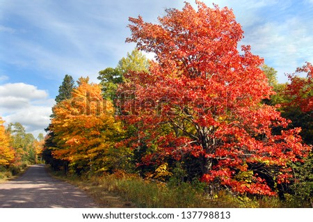 Vivid red maple tree stands besides curving, dirt lane in rural area of the Keweenaw Peninsula, Michigan. - stock photo