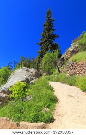 Vivid vegetation near Parnassus Mountains, Greece - stock photo