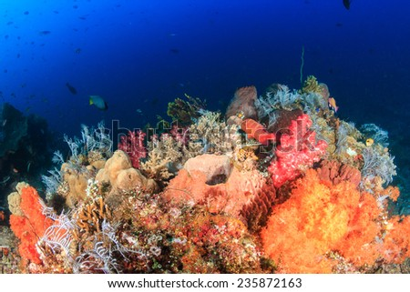Vividly colored soft corals on a thriving, healthy tropical coral reef - stock photo