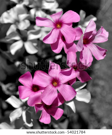 Voilet Flowers Close Up - stock photo