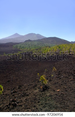 Volcanic soil with pioneer trees on Teide National Park, Tenerife, Canary Islands - stock photo