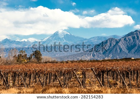 Volcano Aconcagua and Vineyard. Aconcagua is the highest mountain in the Americas at 6,962 m (22,841 ft). It is located in the Andes mountain range, in the Argentine province of Mendoza - stock photo