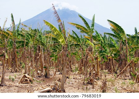 Volcano Concepcion and banana plantation on the island Ometepe, Nicaragua - stock photo