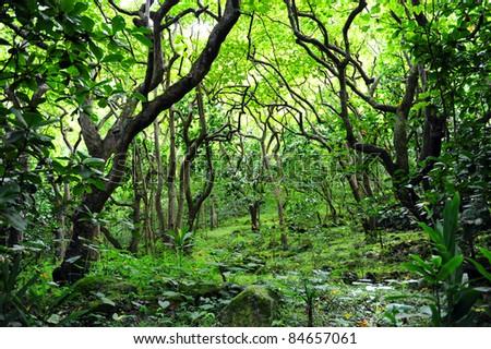 Waipio Valley, Big Island, Hawaii - stock photo