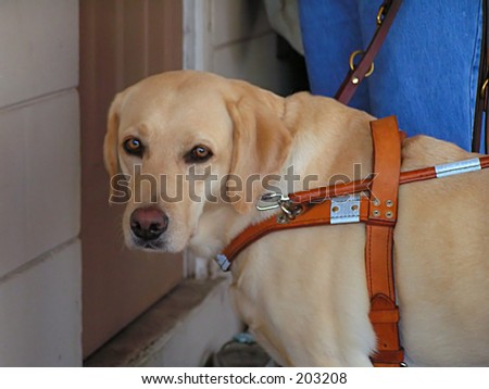 Waiting at the door - stock photo
