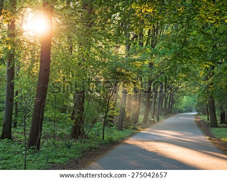 Walk in the park in the morning backlighted - stock photo