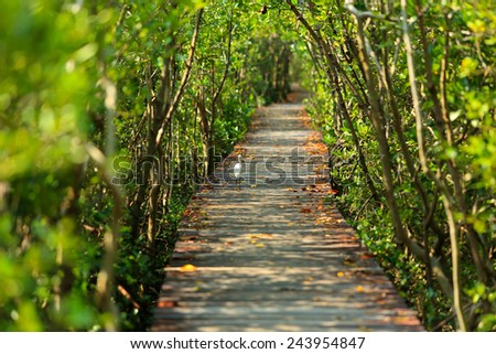 walk way in mangrove forest, other name is inter tidal forest - stock photo