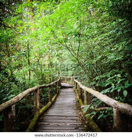 walk way into rain forest, inthanon mountain,chiang mai, thailan - stock photo