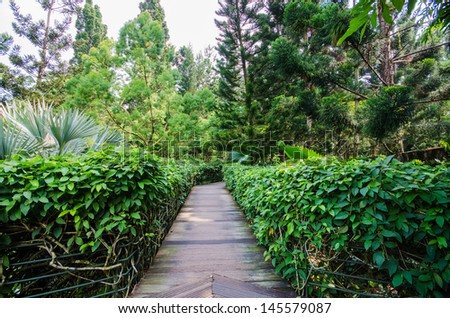 Walk way Path through a Tranquil Verdant Botanical Garden - stock photo