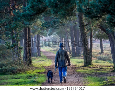 Walking a dog in New forest in the evening. - stock photo