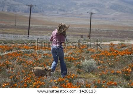 walking girl with her dog, poppy flower field - stock photo