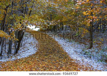 Walking path in a park in early winter - stock photo