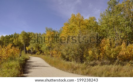 walking path on a park in autumn - stock photo