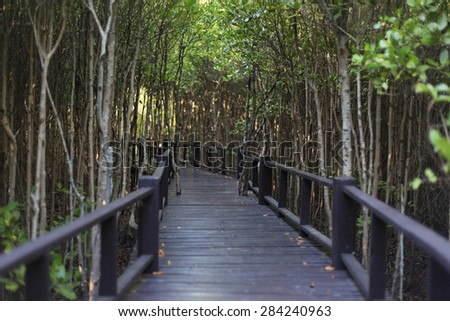 Walkway bridge in mangrove Pranburi, Prachuap Khiri Khan province, Thailand - stock photo