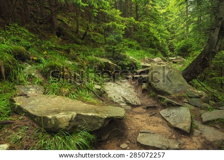 Walkway in summer forest. Beautiful natural landscape - stock photo