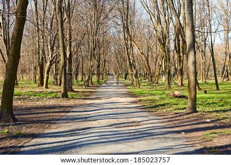Walkway in the old park in early spring, bare trees miss the sunlight on the ground - stock photo